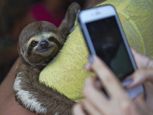 Sloth_selfie