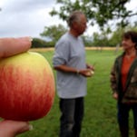 Chad and  Claudia Lunt have a historic orchard near Radersburg