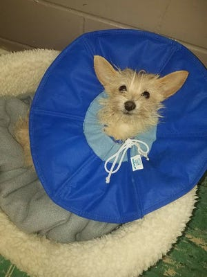 An injured dog was brought to Everhart Animal Hospital on March 16, 2017. Veterinarians tried to save him, but he succumbed to his injuries on March 24.