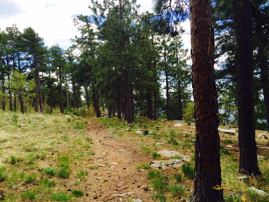 A path follows the edge of the Mogollon Rim, just off of Forest Road 300 about 30 miles from Payson. Some segments of the path, which connects scenic overlooks, are paved and some are easy-to-ride trail.