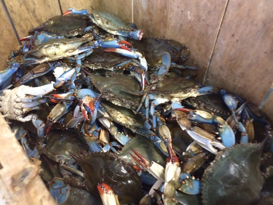 Crab Trap 239 has opened in Fort Myers.
