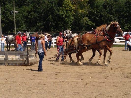 -horses.jpg_20140809.jpg