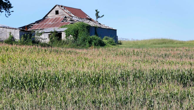 Drought-stressed corn grows on a farm near Oregon, Mo., in late August. Drought expanded this week in much of the Midwest, including Missouri.