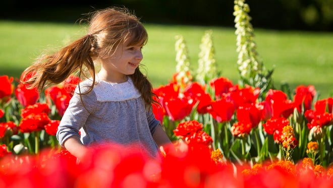 Ariana Bearden, 2, of Middletown happily prances through the colorful blooming tulips in the Flower Garden Walk area of Longwood Gardens in Kennett Square.