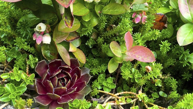 Think of succulents as the new African violets. They thrive indoors or out.