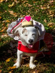 Agnes McFuzz dresses like the Queen of Hearts for KennelResorts'