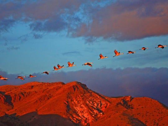 Marvin De Jong captured this image of cranes in flight
