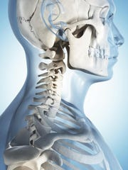 In a head transplant, reattaching the spinal cord and