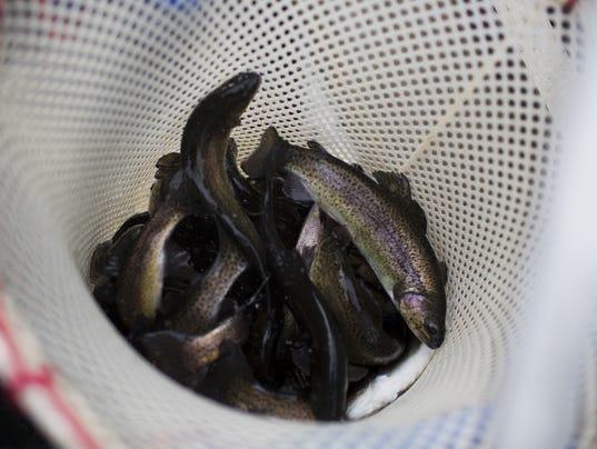 US-ENVIORNMENT-WILDLIFE-FISH-STOCK