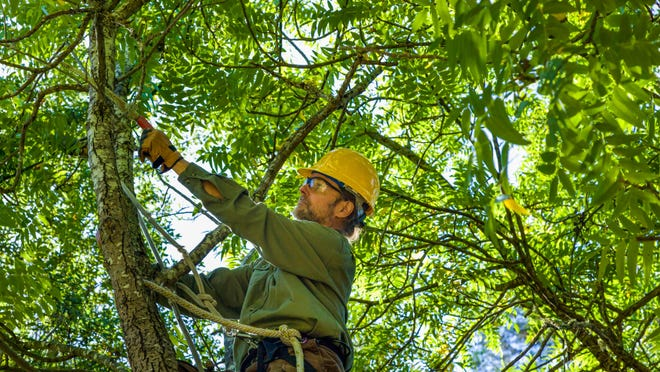 "Proper pruning is important. ""Preventive maintenance goes a long way and prevents expensive issues later,"" said Adam Moser, estimator at Brown's Tree Service in Topeka."