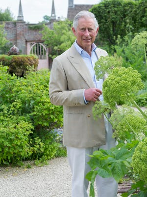 Prince Charles in the gardens at his Highgrove estate.