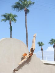 Colt's Lodge is a renovated small hotel in Palm Springs that has taken numerous steps to be environmental.