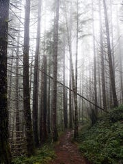 A trail winds through the Tillamook State Forest, a