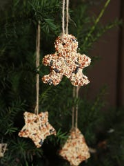 Learn how to attract winter birds to your yard with seed ornaments on Friday.