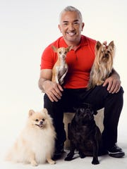 Cesar Millan's Las Vegas residency runs Sept. 12-18 at the MGM Grand's David Copperfield Theater.