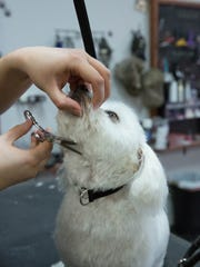 Pet Health can also include getting dogs groomed. according to Kat Lacy, manager of Better Life Pet Foods. Keeping your pets gromed stops them from getting fur matted with could lead to dogs chewing and giving them selves hot spots and other types of skin issues. As well keeping their nails short, helps prevent some bone issues. Also Heather Nordwall, mentioned that they see the animals more than the vet and sometimes the groomers notices lumps and possible ear infections, which then the owner of the pet can take the  dog or cat to the vet.