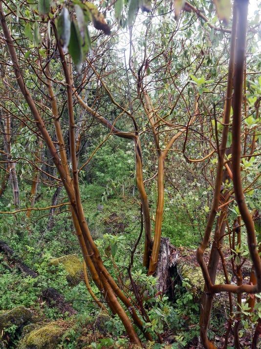 OREGON OUTDOORS ADVENTURE CAMASSIA NATURAL AREA