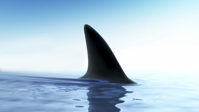South Carolina had more unprovoked shark attacks during a recent 10-year stretch than any other state in the South except Florida, according to a national consumer organization's website.