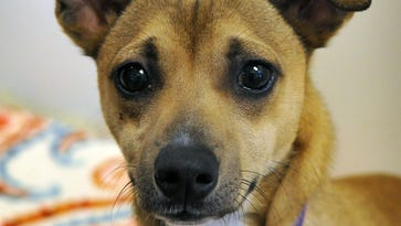 Shelter overcrowded; last-chance adoption event is Saturday