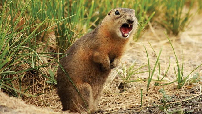 After prairie dogs invade her land, a writer weighs the cost of eliminating them.