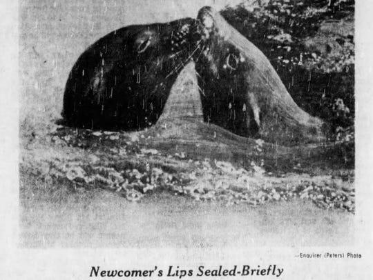 Clip from The Cincinnati Enquirer in July 9, 1963, after Chilo had been rescued from the river and taken to the Cincinnati Zoo.