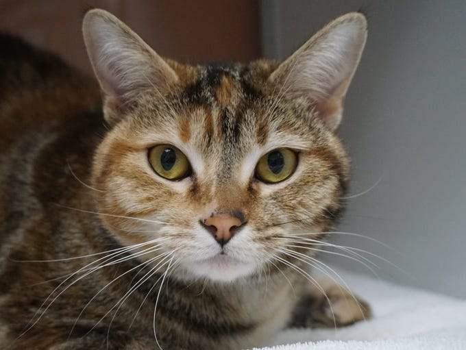 Sparrow is a unique 1-year-old cat looking for the