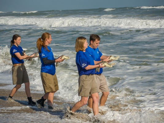 SeaWorld_Orlando_Returns_Ten_Kemp_s_Ridley_Sea_Turtles..jpg