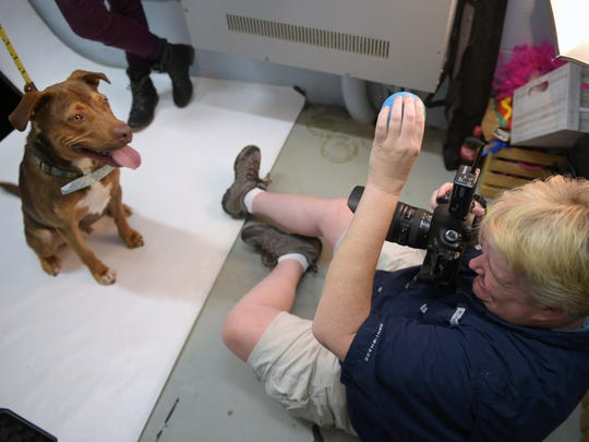 Penny Adams gives a Tonka peanut butter while taking his picture in a closet turned photo studio at the Williamson County Animal Center on Sept. 30, 2016. Adams volunteers taking portraits of shelter animals at Williamson County Animal Center in hopes that the portrait will encourage an adoption at a loving home.