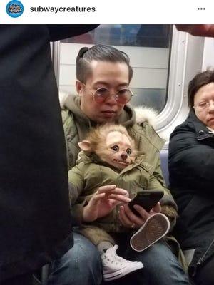 From Subway Creatures, Rick McGuire's Instagram account