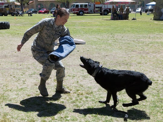 Staff Sgt. Tabitha Lyle, the kennel master at Holloman Air Force Base, helps demonstrate what MWD Cola can do. Cola is a detection dog at the air force base. The demonstration took place during the NMSU Air Force ROTC A&M Day Thursday March 29, 2018.