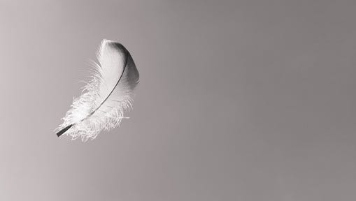 Is it just a feather, or a sign from above?