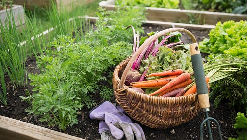 Learn about what to plant during the fall vegetable gardening season