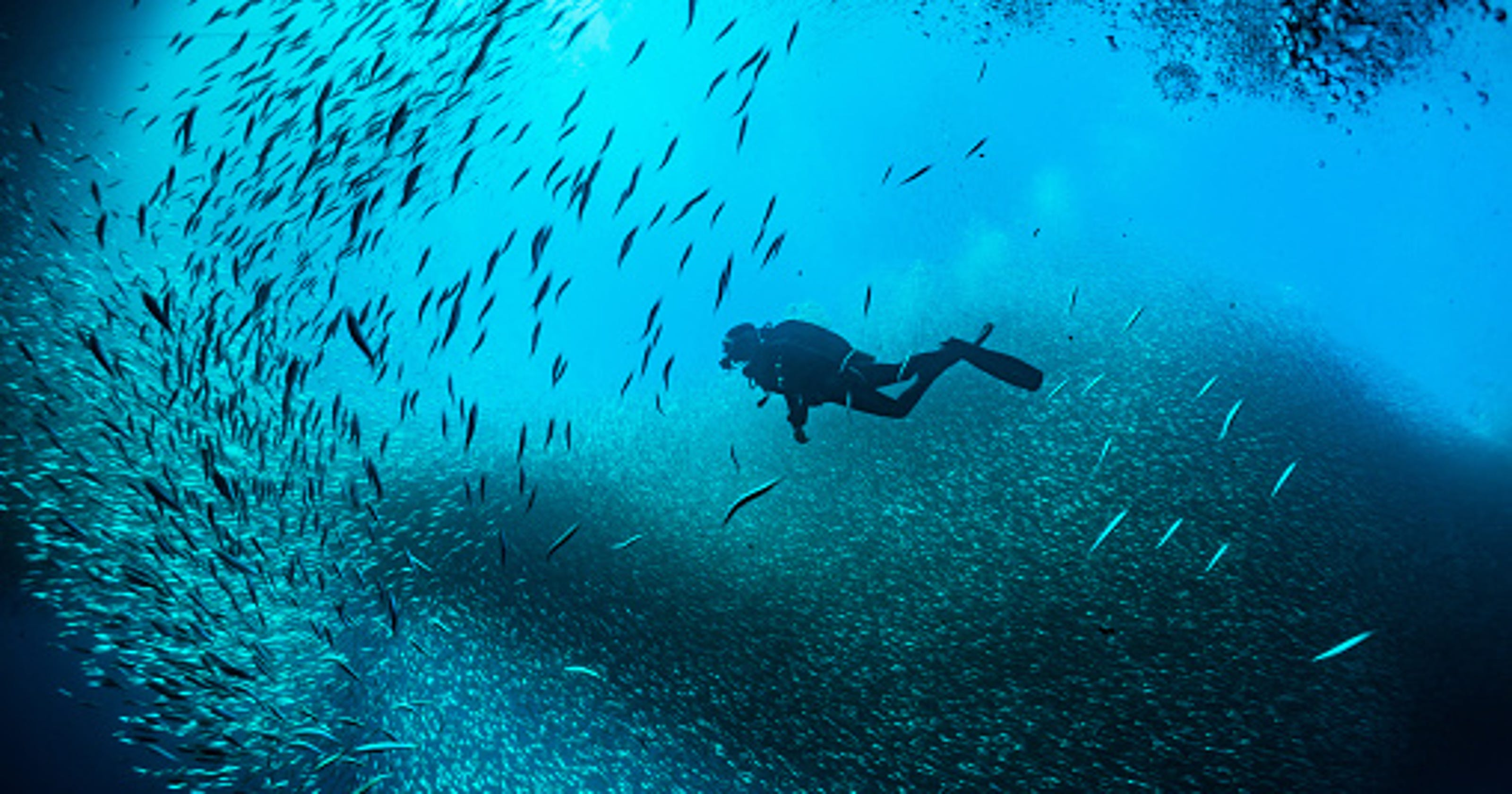 Dive in! Get started scuba diving, snorkeling in Pensacola