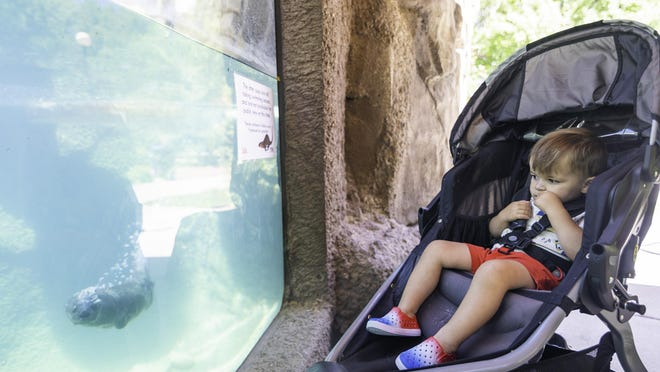 Liam Cover, 2, watches a river otter swim by during a trip Wednesday to the Pueblo Zoo.