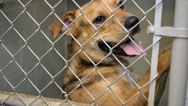 A dog jumps in the cage waiting to be adopted at the Lake County Humane Society in Umatilla.