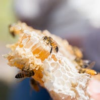 WOW To Do List: National Honey Bee Day BOGO
