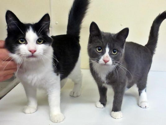 ELM Bradford pets Dilly & Stewie