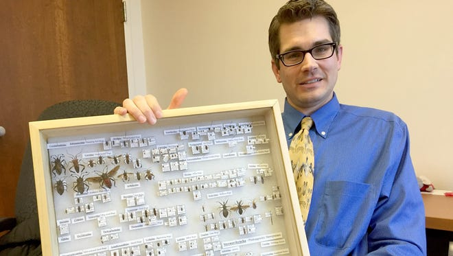 Mark Vanderwerp, 34, of Birmingham looks over a collection of insects he made that includes Elm Seed Bugs he found in his backyard.