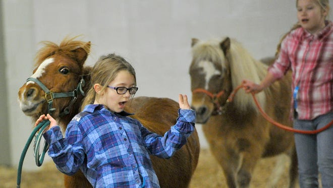 Izabella Howell, 8, and her cousin Elizabeth Eckenrode, 9, sing and dance while exercising Smarty, foreground, and Sweet Pea, their miniature horses, at the Pennsylvania Farm Show in Harrisburg, Pa. on Monday, Jan. 11, 2016. The duo from Newville, Pa., attended the show to participate in the mini horse pull. It was Izabella's first year competing and Elizabeth's second.