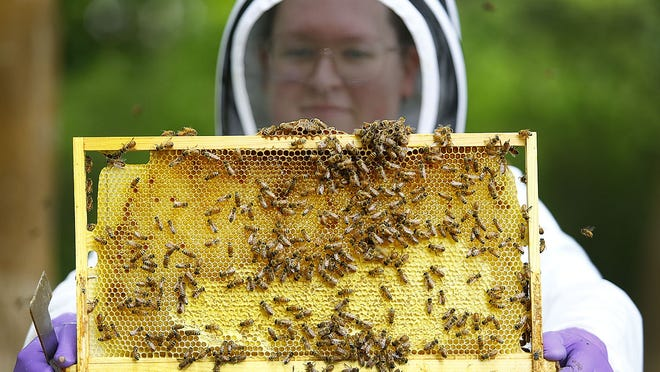 Margaret Goodwin has been bee keeping in her parents' back yard for two years. Greg Derr/The Patriot Ledger
