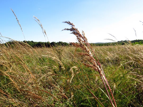 Although the Patoka River refuge is in large part running water, ponds, sloughs, wetlands, marsh or bottomland, many acres are also given to prairie plantings, which provide nesting area for a variety of native bird species.