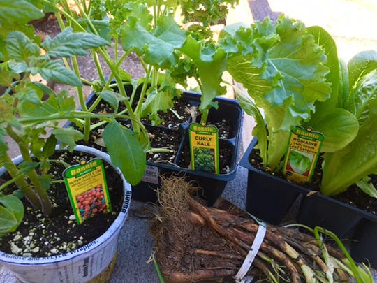 Have fun growing a variety of salad veggies.