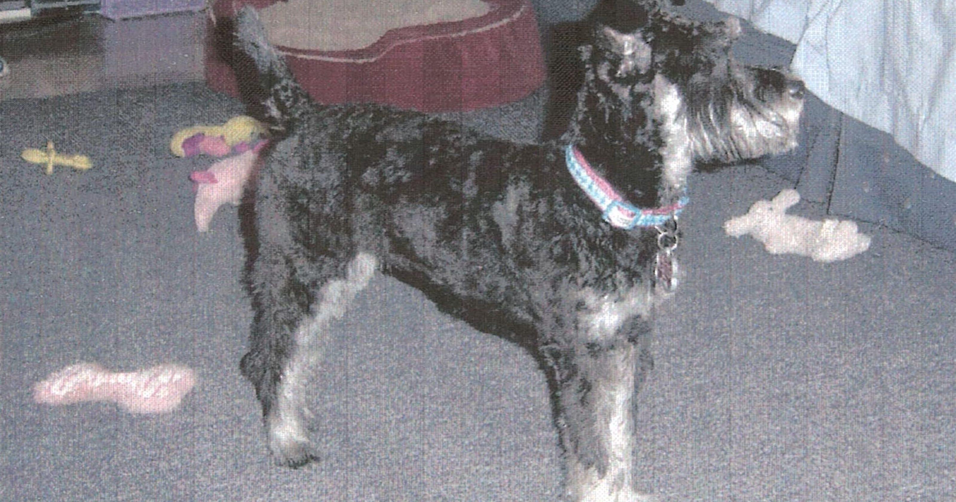 473556d41368 Franklin dog stolen in burglary back home  2 arrested