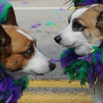 Young-Williams to host 10th annual Mardi Growl