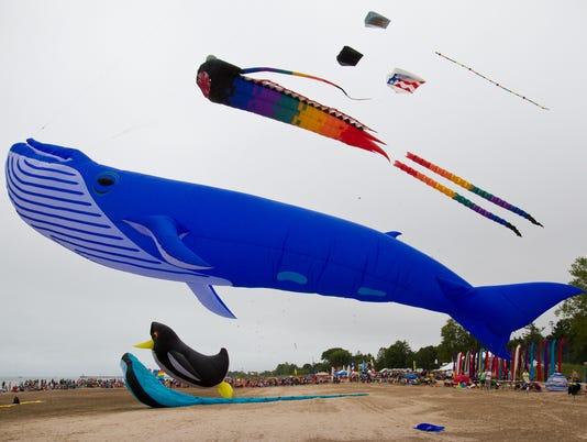 636075551344943813-MANBrd-09-03-2014-Herald-1-A005--2014-09-02-IMG-kite-whale.jpg-1-1-FN8E6D98-L478110394-IMG-kite-whale.jpg-1-1-FN8E6D98.jpg