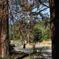 Arroyo Verde Park, hit hard by the Thomas Fire, reopens in Ventura