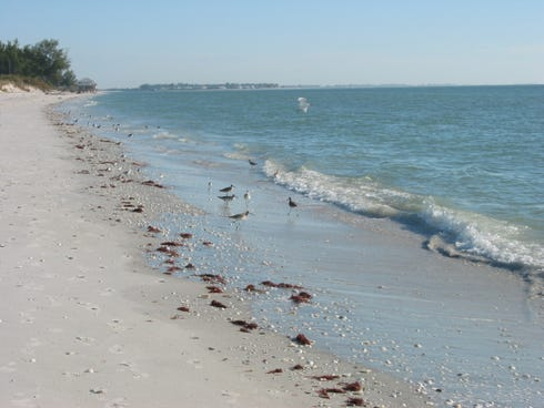 Don Pedro Island State Park off Florida's Gulf Coast offers a respite for birds and beach lovers.