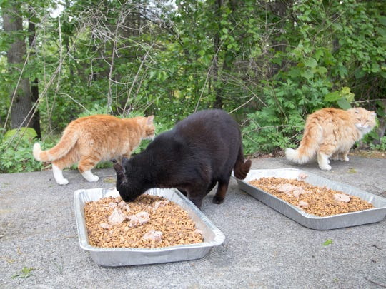 A feral cat feeding station.