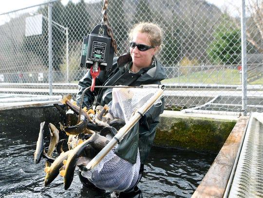 Jillian Osborne dumps a few fish back into the water