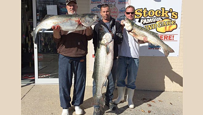 Adam Anthony, Drew Hemerich and Jim Miller with three nice bass up to 41 lbs. The trio caught the fish while practicing for the Fall Elks Striper Classic. 11/8/15.